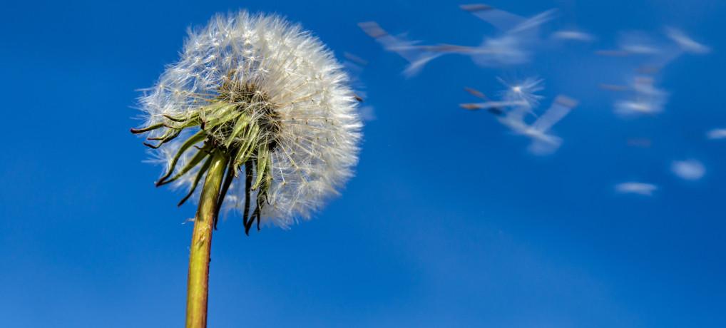Alergie i odczulenia